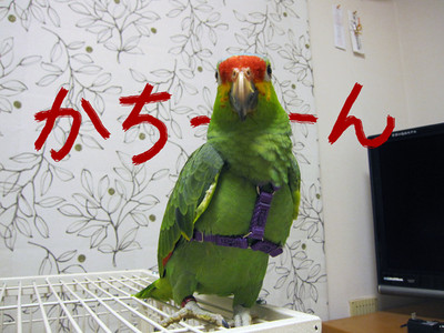 20140427_hanesu