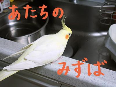20140627_itatanoaru2