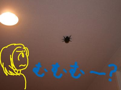 20140629_beetle2