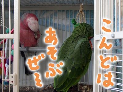 20140725_yaritaihohdai