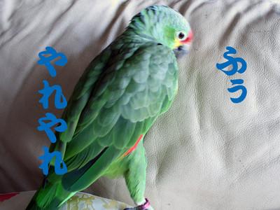 20151024_mizikaiasi4