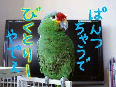 20160124_mizuabi5
